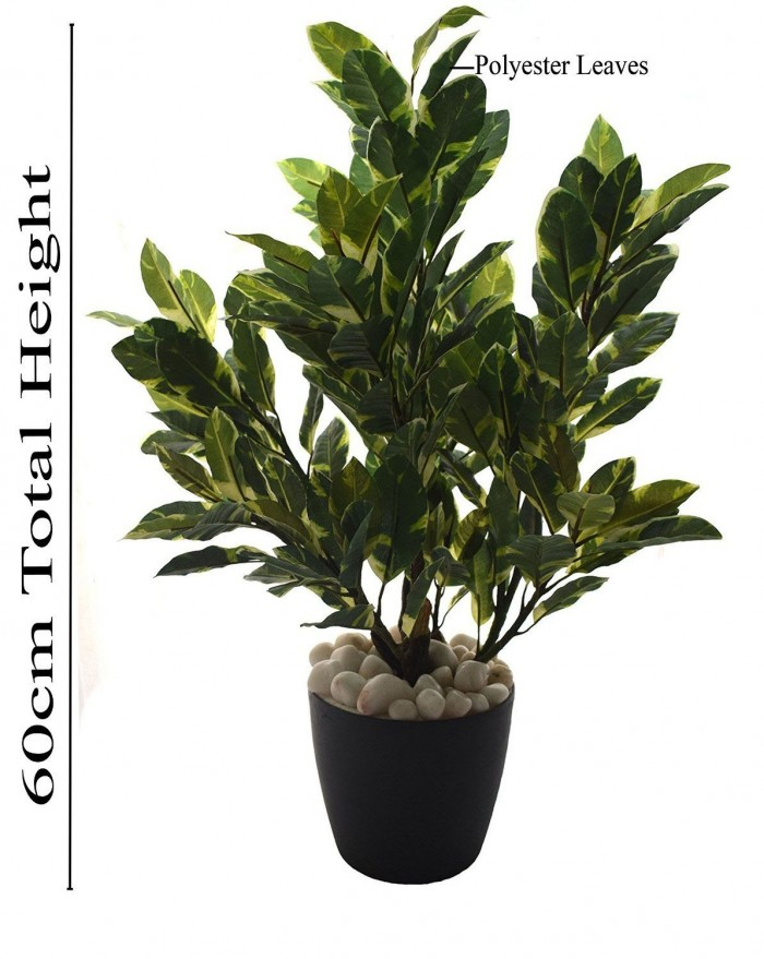 Buy 60cm Tall Mini Quercus Plant Without Pot (White And Green) Online