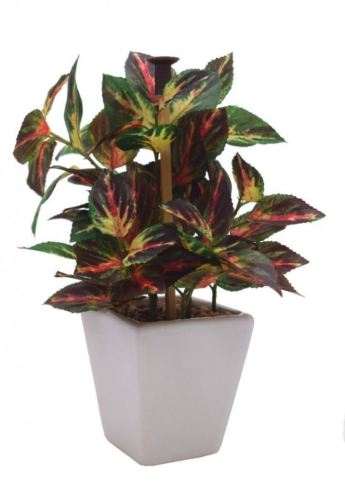 Buy Premium Range Mini Artificial Wandering Plant With Stylish Ceramic Vase (ABT19CMWANDERING/72LVS/