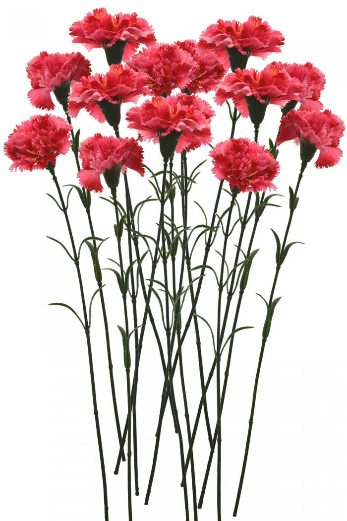 Buy Artificial Single Carnation Stems (Set Of 15, Dark Pink) Online