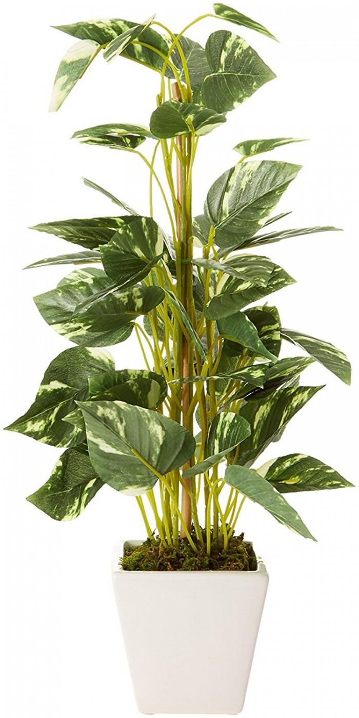 Buy Artificial Pothos Bonsai Plant With Pot (50 Cm) Online