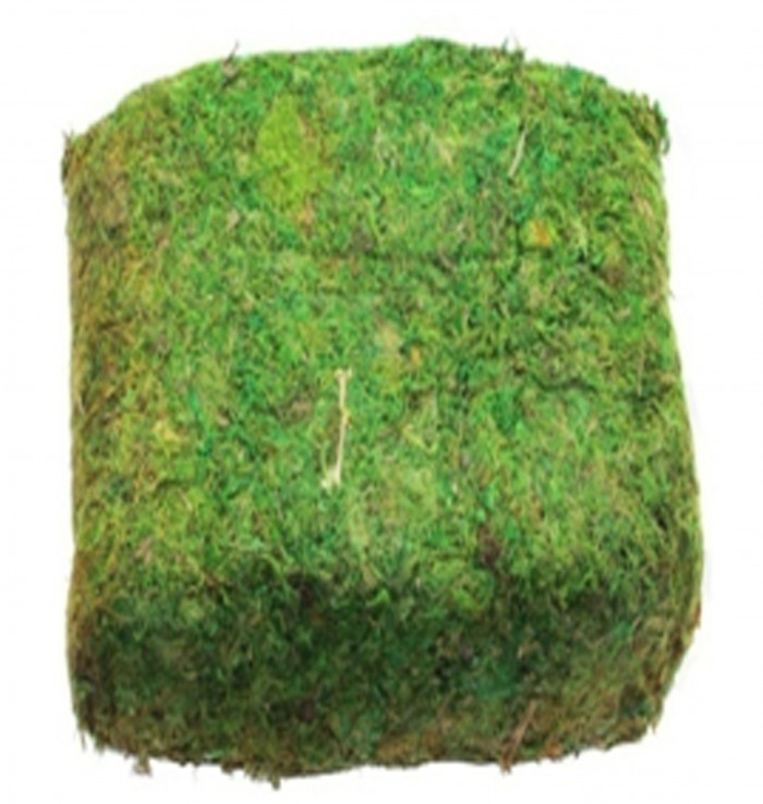 Buy Fourwalls Artificial Green  Reindeer Moss For Lining Plant Flower Garland Decor 1 Kg Paket Onlin