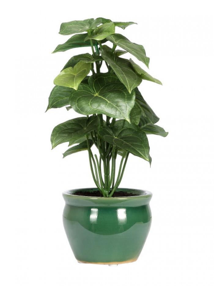 Buy Artificial Jatropha Plant(green (38 CM 26 LVS) Online