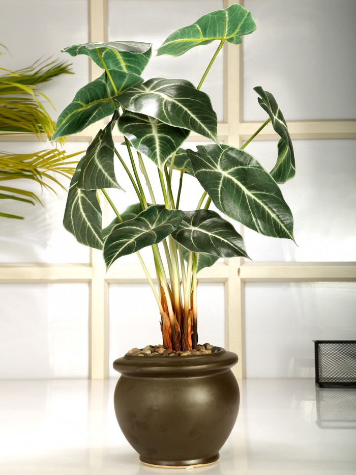 Buy Artificial Alocasia Bonsai Plant With Pot (59 Cm) Online