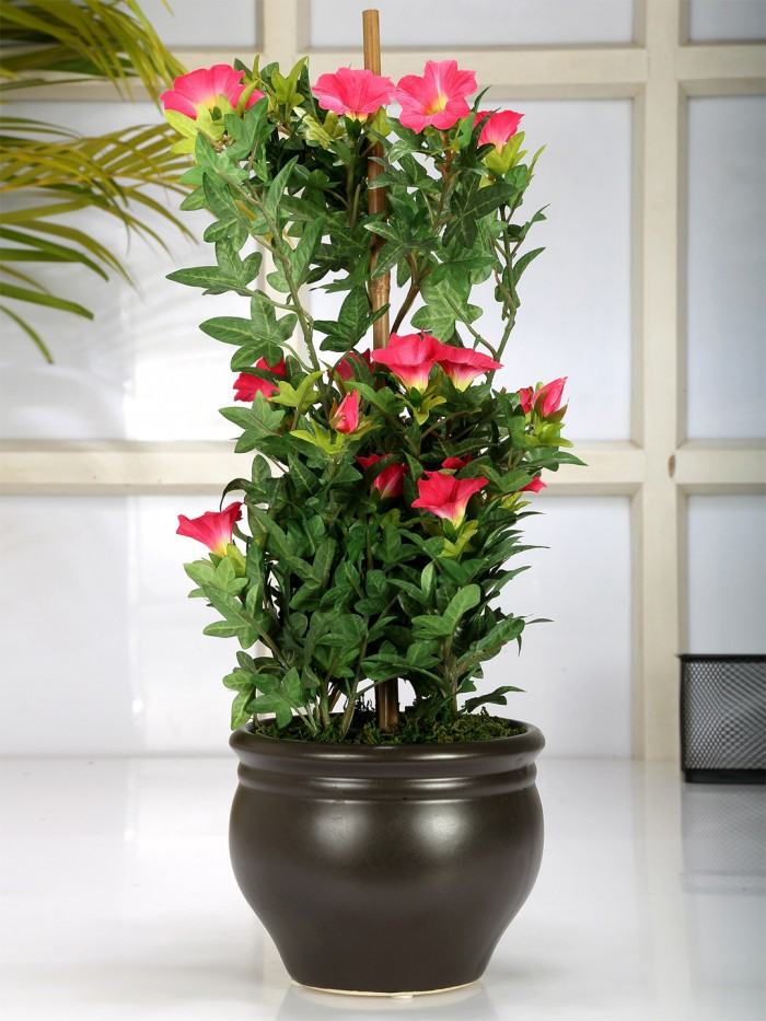 Buy Premium Range Artificial Morning Glory Plant With Stylish Ceramic Vase (ABT50CMMORNINGGLORY/1950