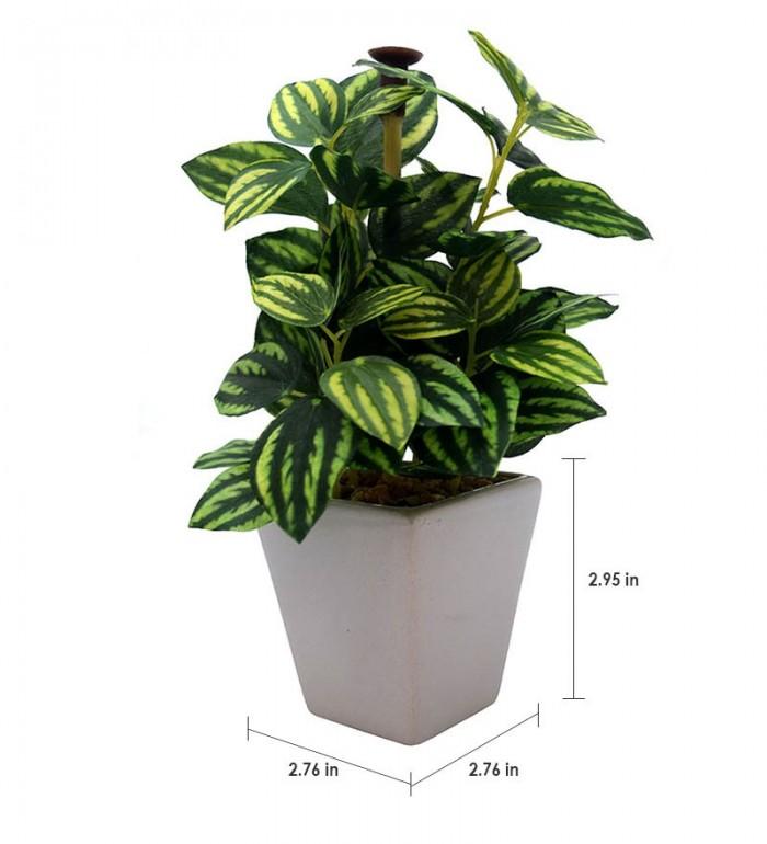 Buy Fourwalls Premium Range Mini Artificial Wandering Plant With Stylish Ceramic Vase (ABT19CMWANDER
