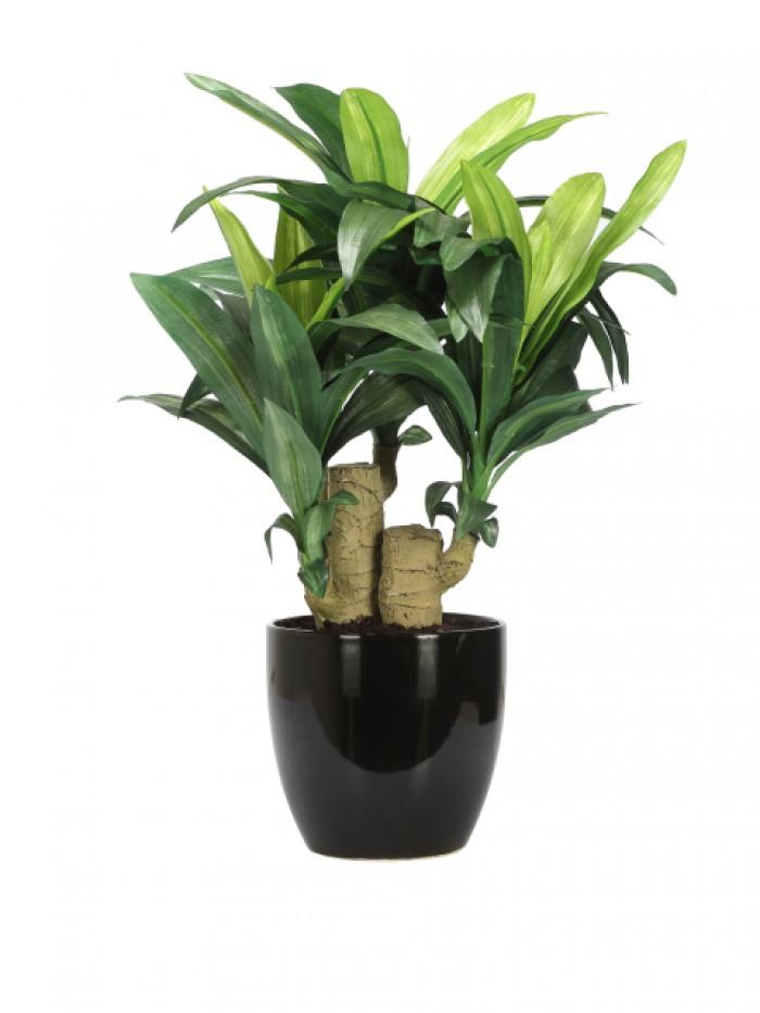 artificial Dracaena bonsai plant ceramic Vase pot