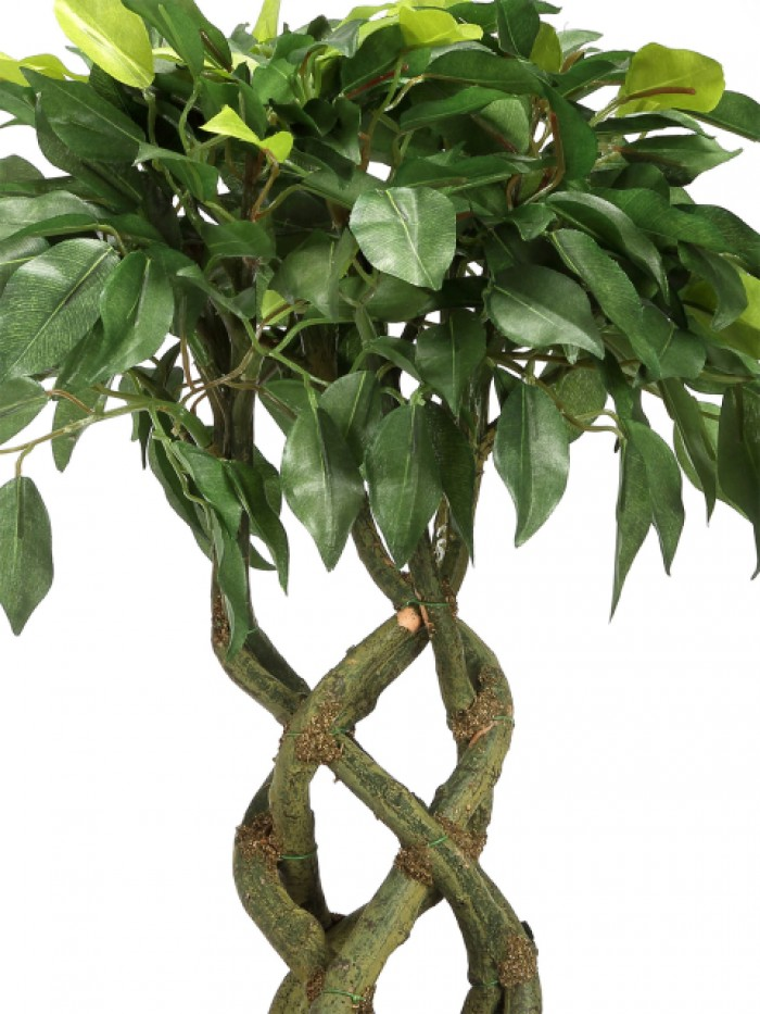 Buy Artificial Bonsai Ficus Plant (6 Stems, 252 Leafs, Green) Online