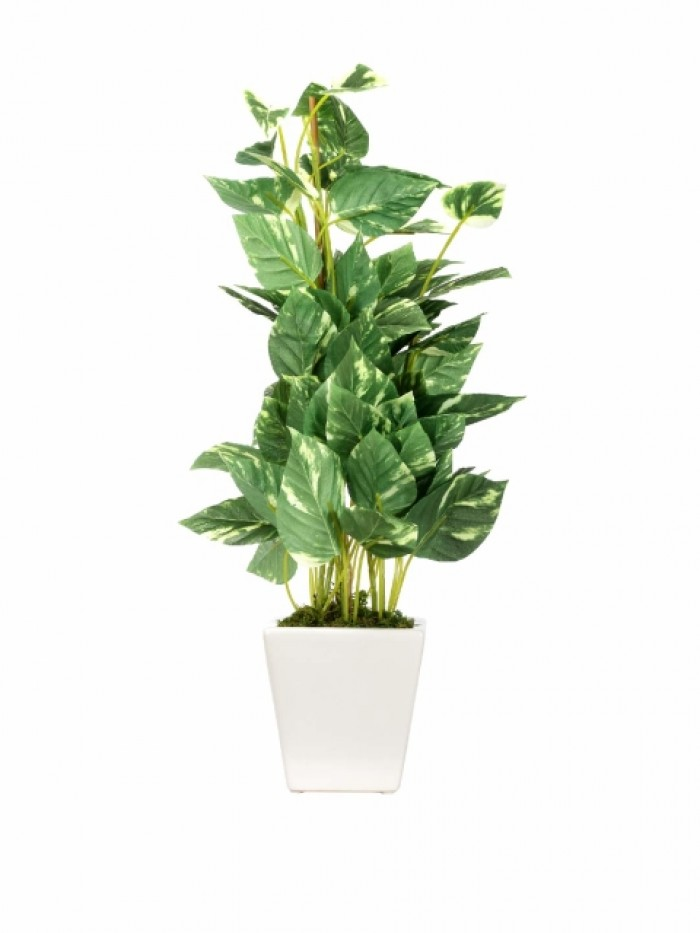 Buy Artificial Pothos Bonsai Plant With Pot (50 Cm) Online