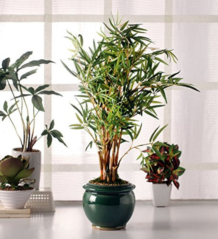 Buy Fourwalls Premium Range Artificial Bamboo Plant With Stylish Ceramic Vase (ABT58CMBAMBOO/515LVS/