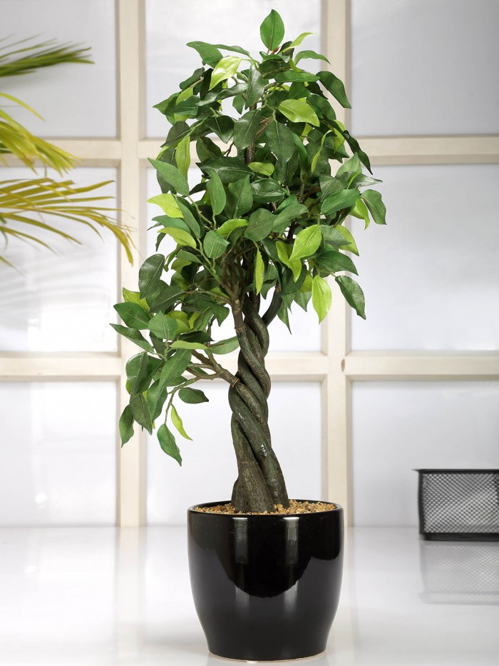 Buy Artificial Bonsai Ficus Plant (255 Leafs, 55 Cm, Mixed Material, Green) Online