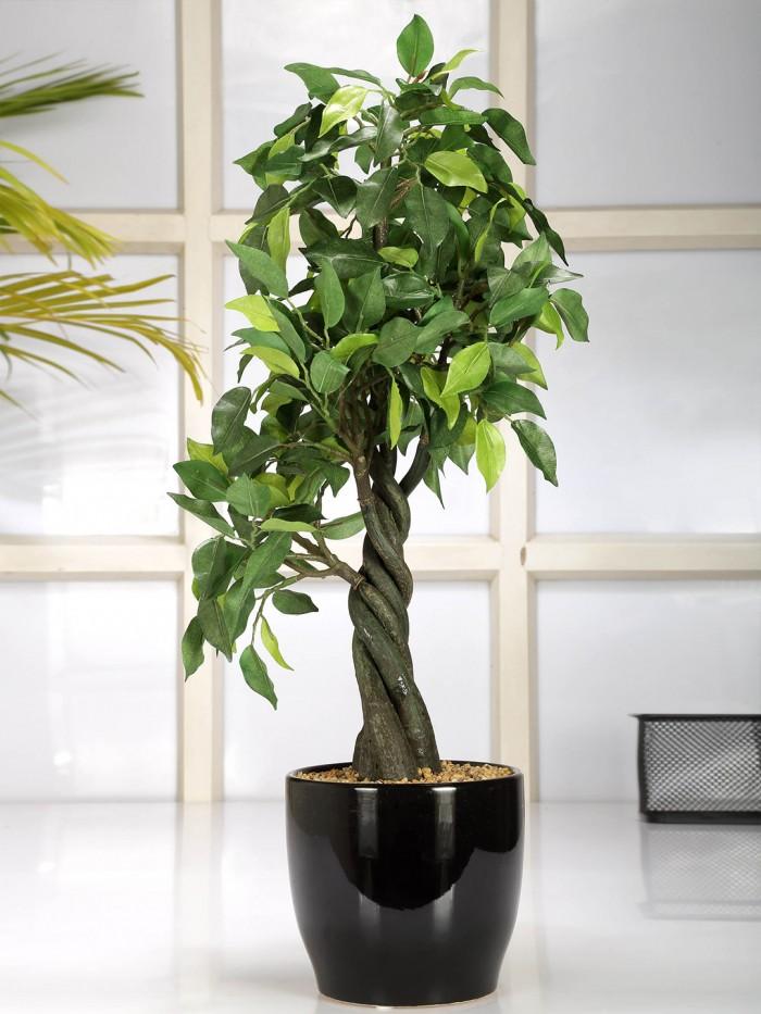 Buy Artificial Bonsai Ficus Plant With Pot (55 Cm, Green) Online