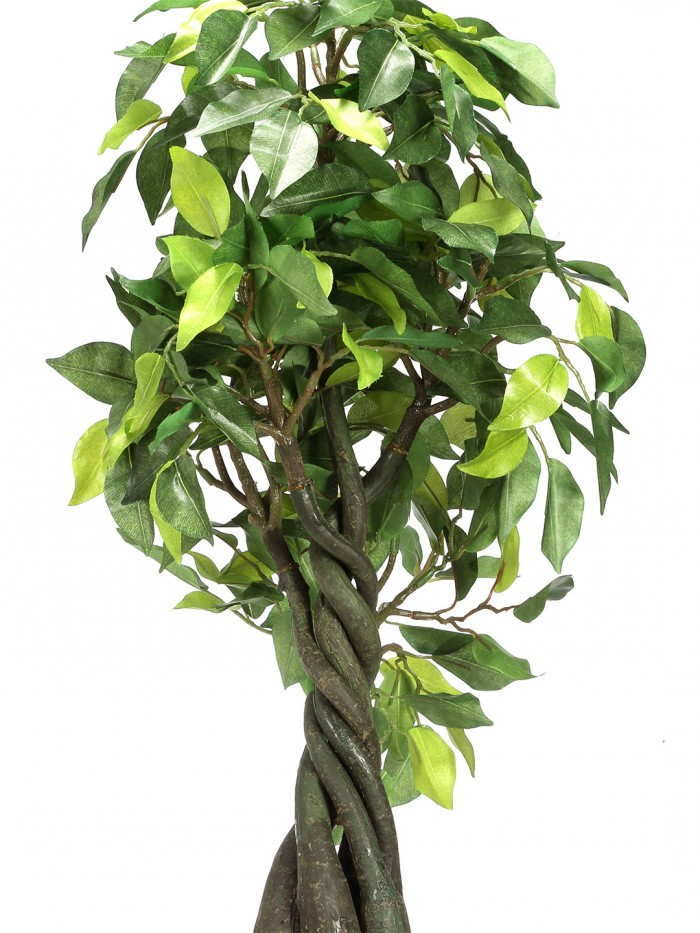 Buy Artificial Ficus Bonsai Plant With Pot (55 Cm) Online