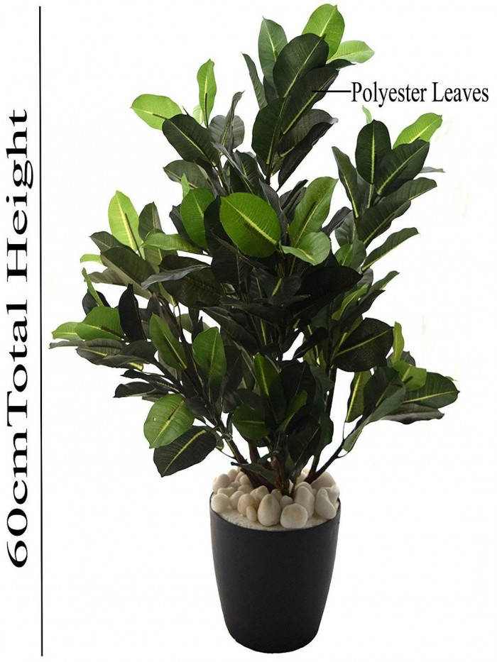 Buy 60cm Tall Mini Quercus Plant Without Pot(Green) Online
