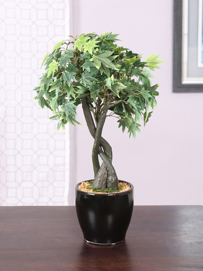 Buy Artificial 39 Cm Tall Classic Artificial Japanese Maple Plant In A Glossy Ceramic Pot Online