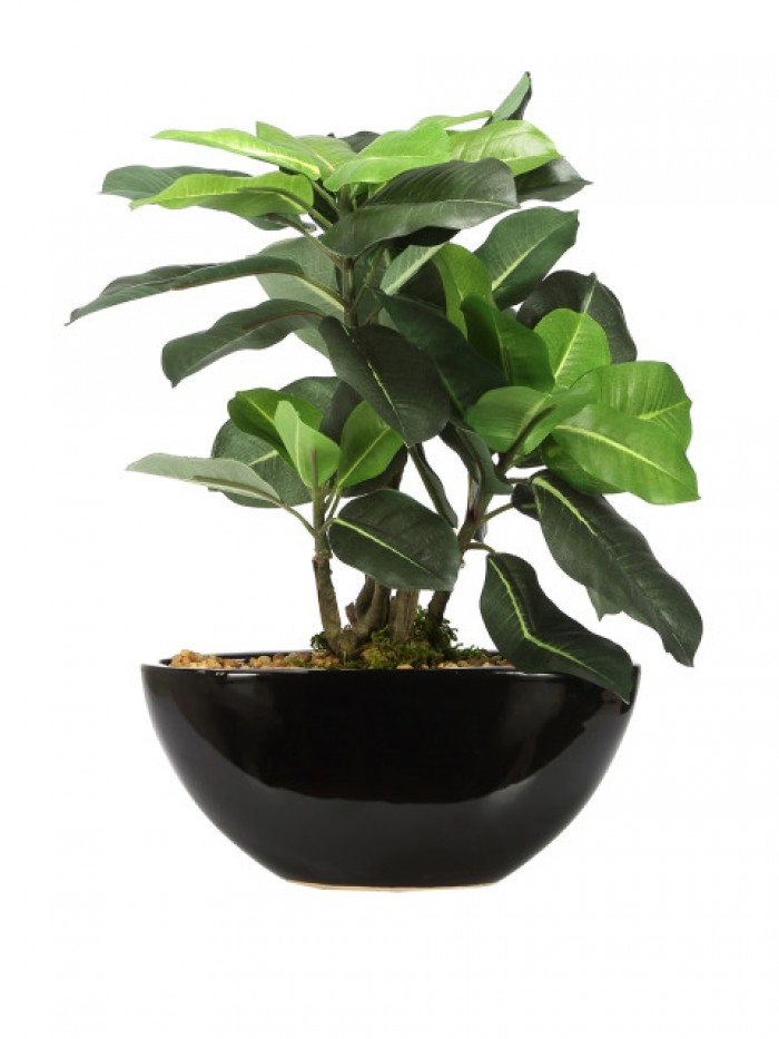 Buy Fourwalls Artificial Quercus Ceramic, Polyester And Polyurethane Bonsai Plant In A Pot (18 Cm X