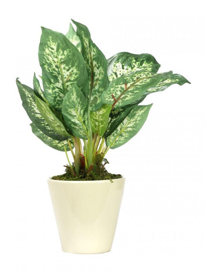 Buy Fourwalls Artificial Dieffebachina Bonsai Plant With Pot (26 Cm ) Online