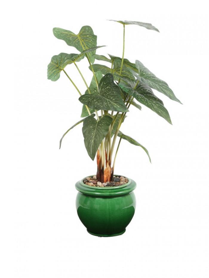 Buy Premium Range Tall Caladium In A Stylish Ceramic Vase(green) Online