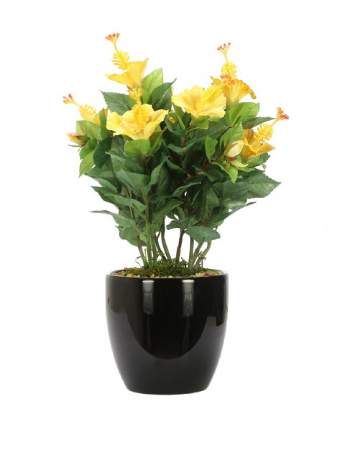 Buy Artificial Hibiscus Flowers In Glazed Ceramic Vase(yellow) Online