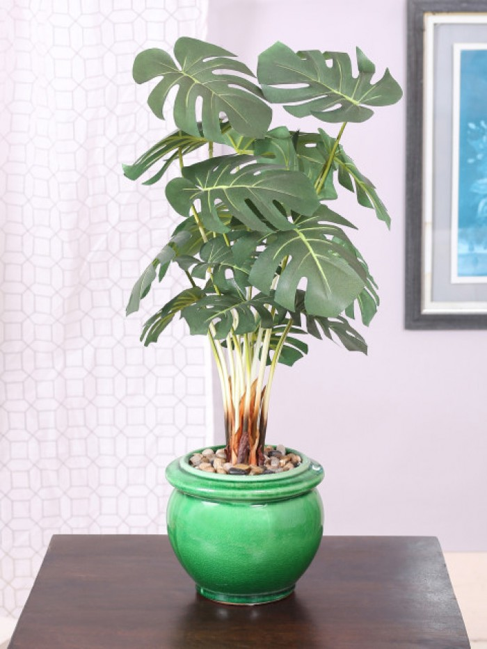 Buy Artificial Philodendron Bonsai Plant With Pot (59 Cm) Online