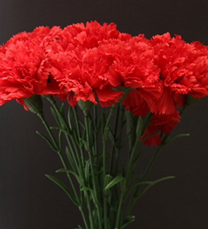 Buy Fourwalls Artificial Single Carnation Stems (Set Of 15, Red) Online