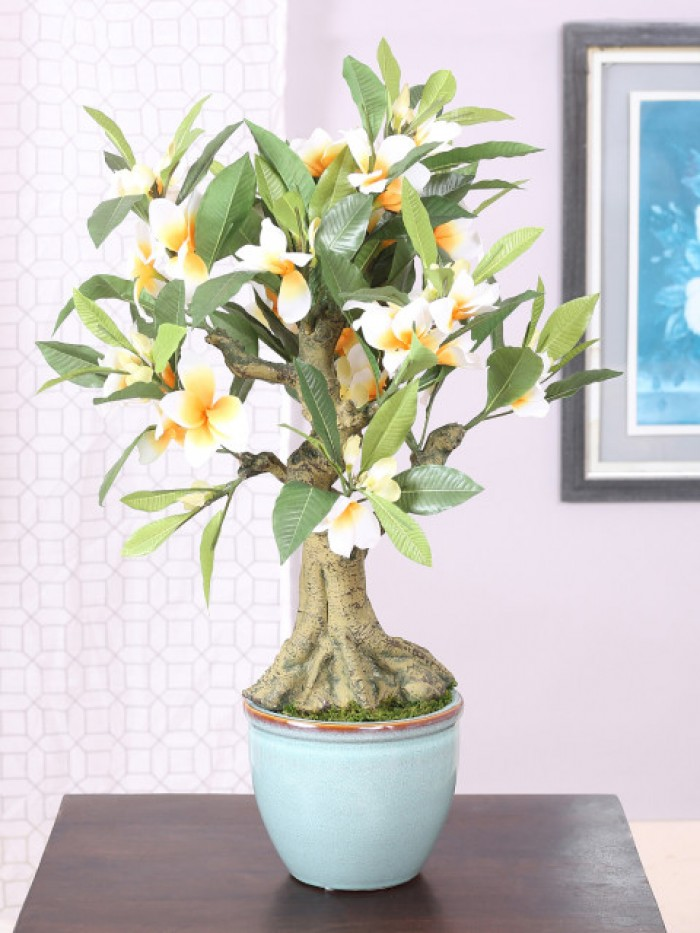 Buy Artificial Frangipani Flowers Bonsai Plant In A Glossy Ceramic Pot (53 Cm Tall, Mixed Material,