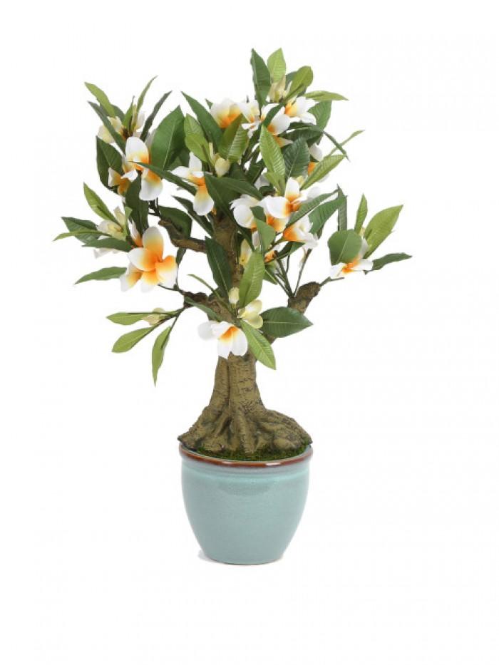 Buy Fourwalls Premium Range Artificial Frangipani Plant With Stylish Ceramic Vase (ABT63CMFRANGIPANI