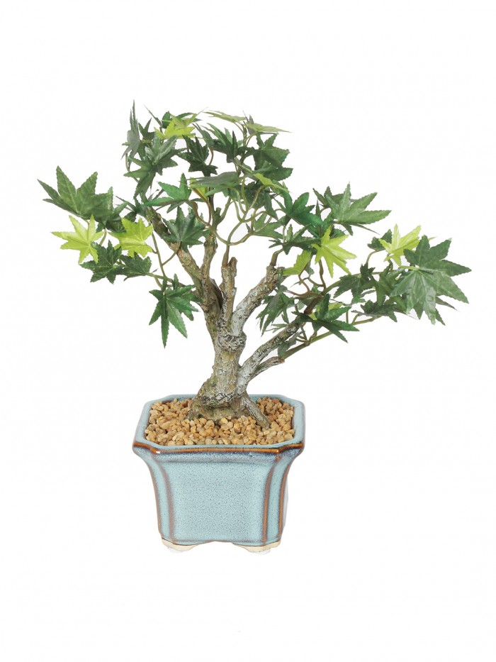 Buy Fourwalls Bonsai Japanese Maple Plant (233 Leafs, 39 Cm, Mixed Material, Green) Online