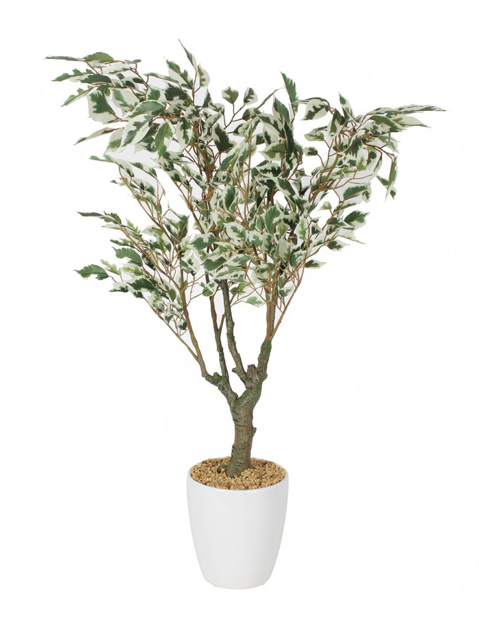 Buy Fourwalls Premium Range Artificial Ficus Plant With Stylish Ceramic Vase (Green/Red, 70 Cm Tall)