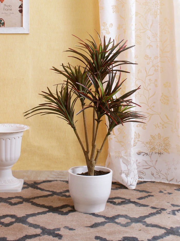 Buy 92cm Tall Decorative Artificial Dracaena Plant Without Pot (220 Leaves, 5 Branches, Red And Gree