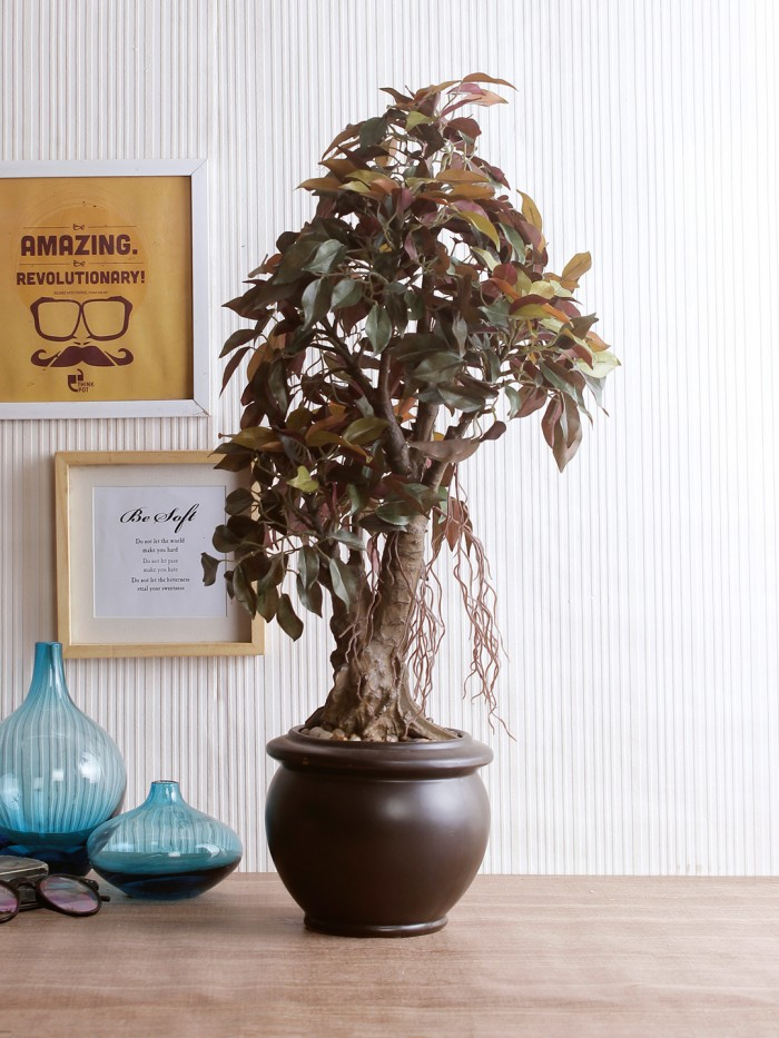 Buy Artificial Ficus Bonsai Plant With Pot (62 Cm) Online
