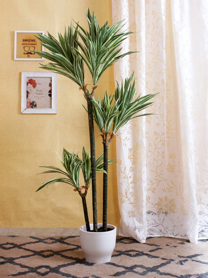 Buy Artificial Dracaena Floor Plant With Pot (150 Cm Tall, 3 Trunks, Green/White) Online