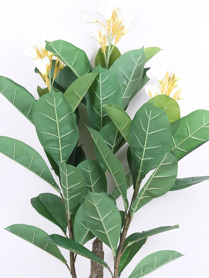 Buy Artificial Frangipani Plant Without Pot (150 Cm Tall, 24 Flowers, 3 Branches, Green/White) Onlin
