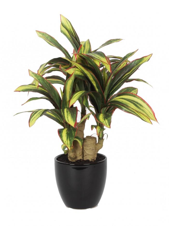 Buy Fourwalls 35cm Tall Premium Range Artificial Calathea Bonsai Plant In A Ceramic Vase (63 Leaves)