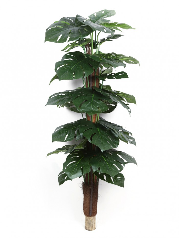 Buy Fourwalls Artificial Money Plant Without Pot (120 Cm Tall, Green) Online