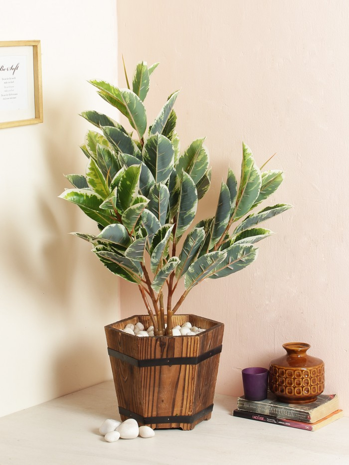 Buy Artificial Dieffenbachia Floor Plant Without Pot (70 Cm Tall, 5 Branches, Green/White) Online