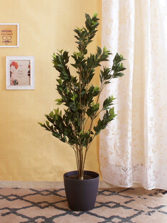 Buy 150 Cm Tall Decorative Artificial Ficus Plant Without Pot Online