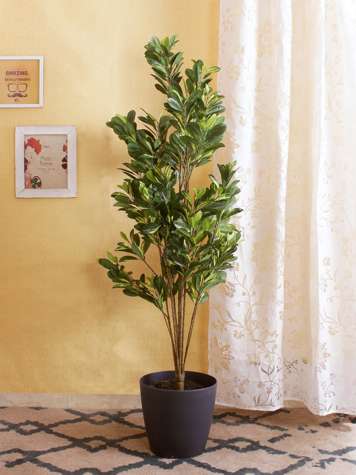 Buy Artificial Scheflera Plant Without Pot (150 Cm Tall, Green, 10 Branches) Online