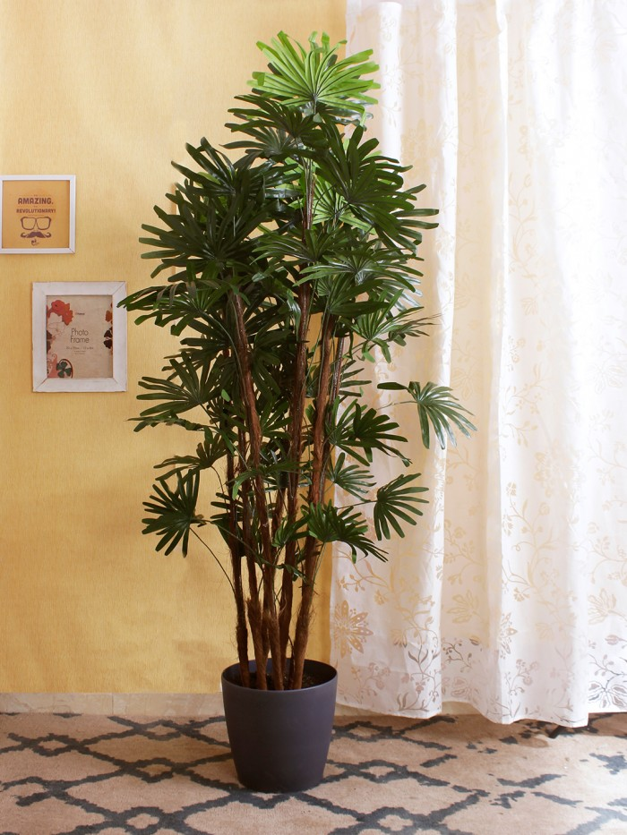 Buy 176 Cm Tall Decorative ArtificialCordyline Plant Without Pot Red Online