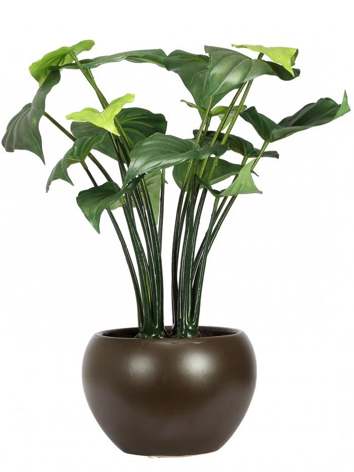 Buy Artificial Alocasia Bonsai Plant With Pot (37 Cm ) Online
