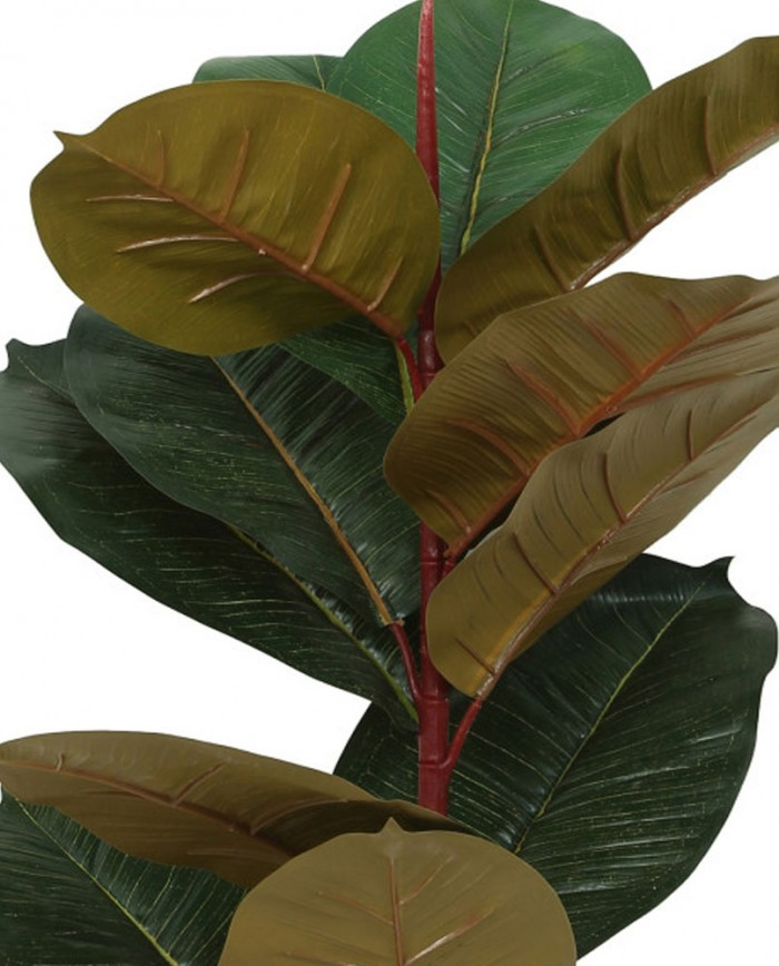 Buy Decorative Artificial Rubber Plant For Home And Office D�cor Without Vase (75 Cm Tall, Red/Gre