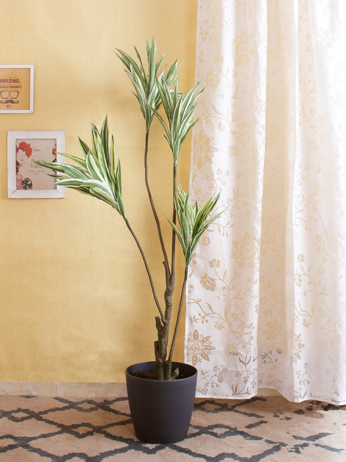 Buy Artificial Dracaena Floor Plant Without Pot (162 Cm Tall, 4 Branches, Green/White) Online