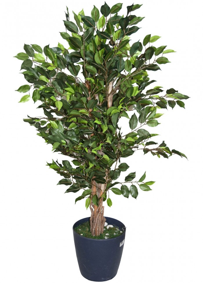 Buy Artificial Money Plant Without Pot (120 Cm Tall, Green) Online