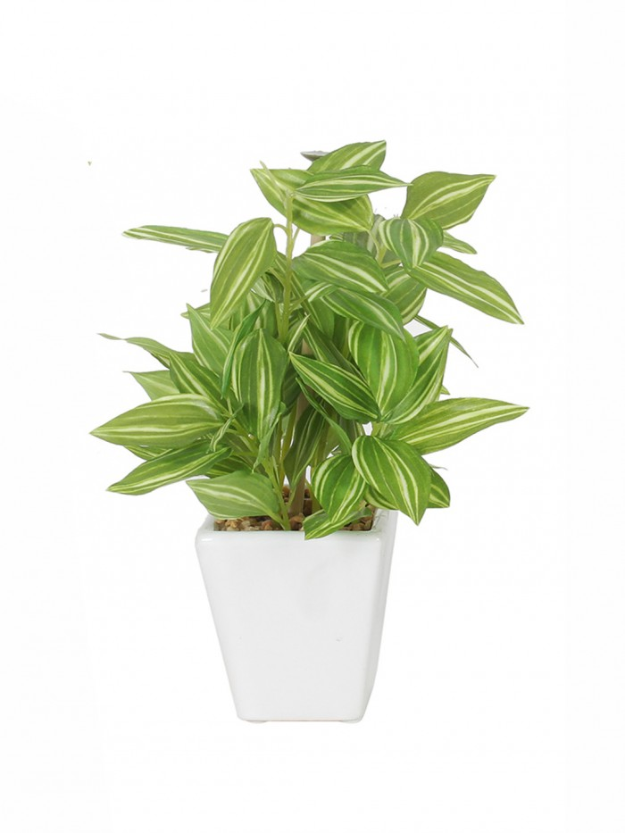 Buy Premium Range Mini Artificial Wandering Plant With Stylish Ceramic Vase (19 Cm Tall, Multicolor)