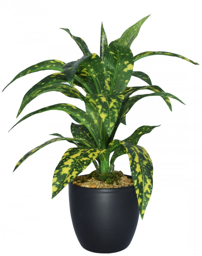 Buy FOURWALLS ARTIFICIAL CROTON PLANT IN A GLASS VASE WITH STONES(2 BRANCHES) Online