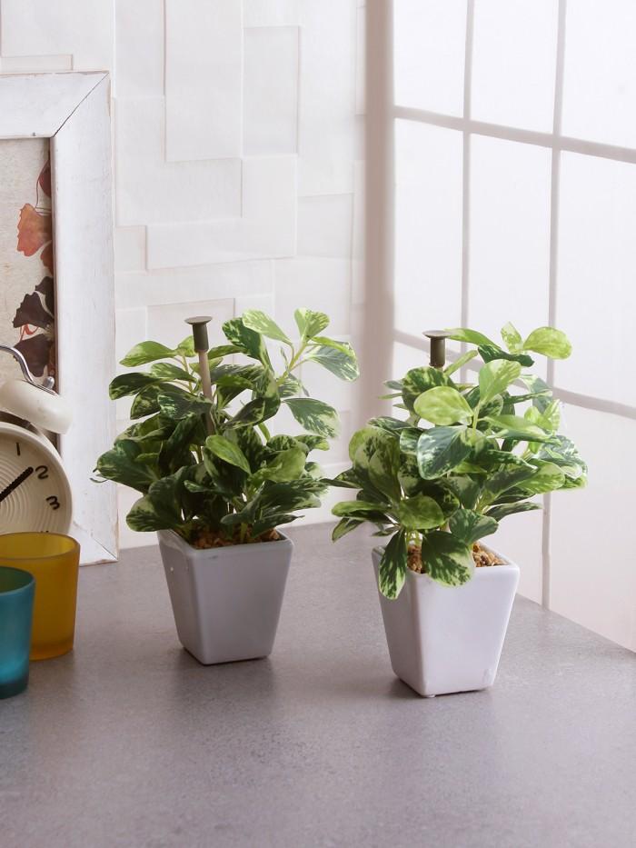 Buy Premium Range Mini Artificial Wandering Plant With Stylish Ceramic Vase (19 Cm Tall, Multicolor)