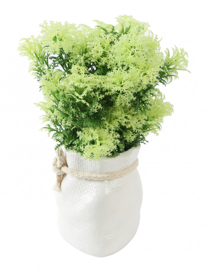 Buy Soft Touch Artificial Plant In A Ceramic Vase (20 Cm Tall, White Green) Online