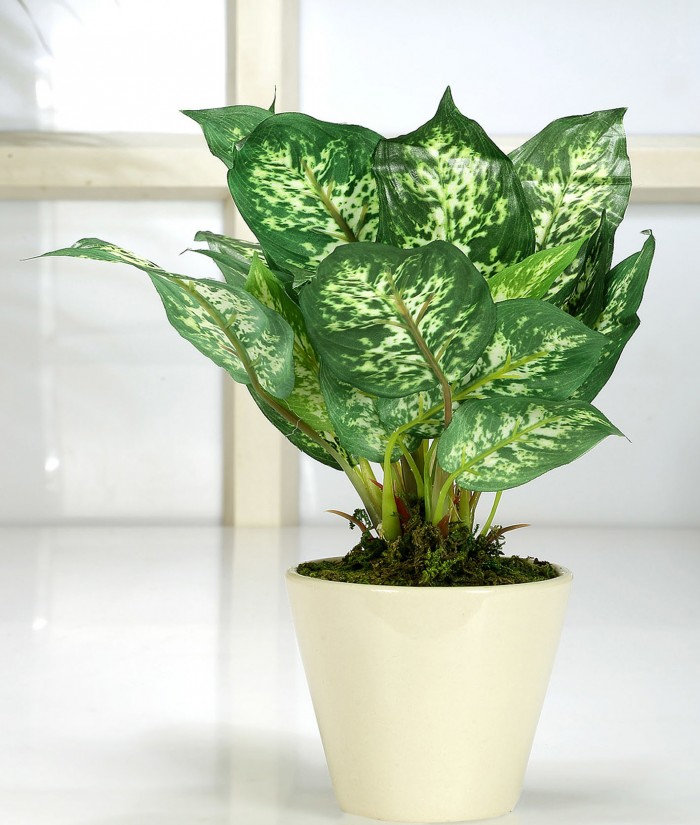 Buy Range Artificial Dieffenbachia Bonsa Plant With Ceramic Vase (26 Cm Tall, 25 Leaves, Green) Onli