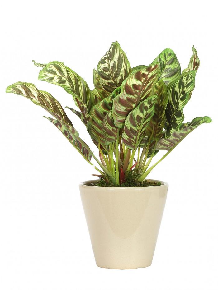 Buy Range Artificial Dieffenbachia Bonsa Plant With Ceramic Vase (26 Cm Tall, 25 Leaves, Green) Onli