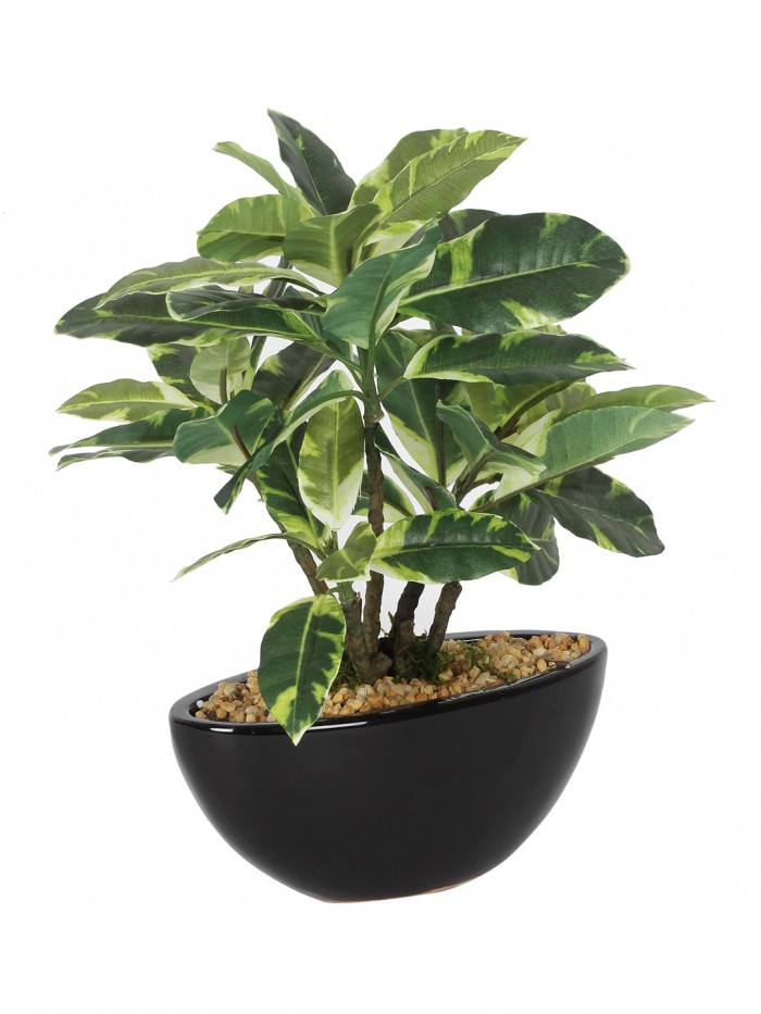 Buy 29 Cm Tall Decorative Artificial Nolina Plant In A Chic Ceramic Pot Online