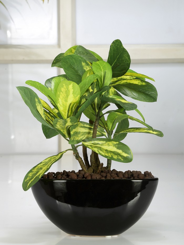 Buy Artificial Natural Looking Schefflera Bonsai Plant In A Ceramic Pot For Home Office Decor (29 Cm